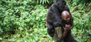 6 Days Nyiragongo & Gorillas Special Safari