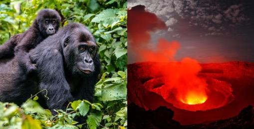 6 Days Congo Rwanda
