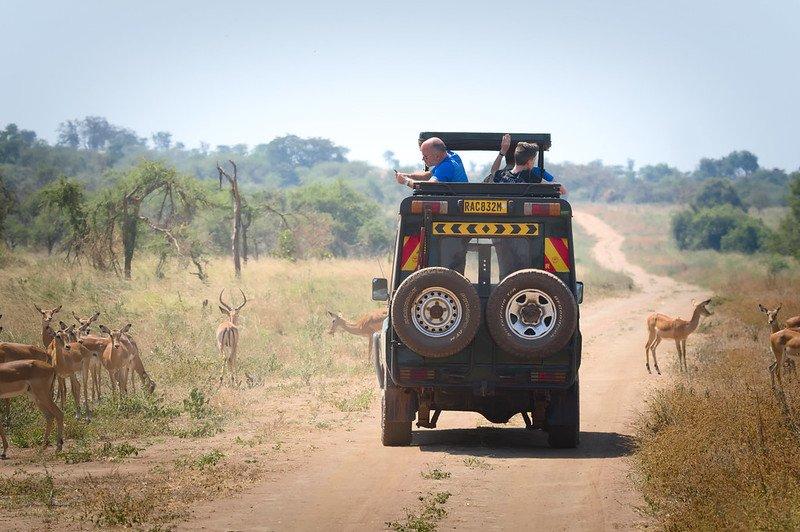14 days DR Congo and Rwanda safari