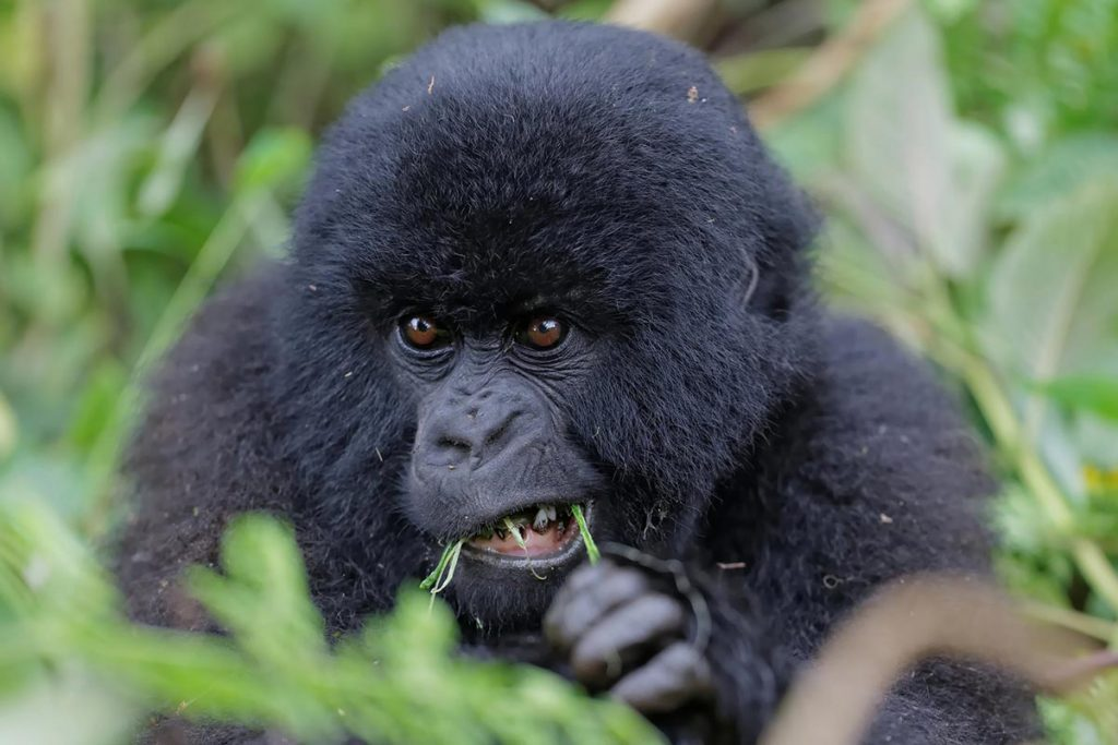 Activities in Virunga National Park