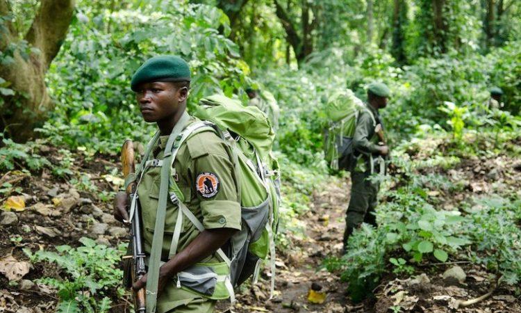 Safety of Virunga National Park
