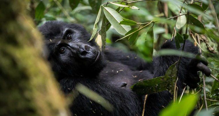 5 days Bwindi Gorillas & Nyiragongo Hike