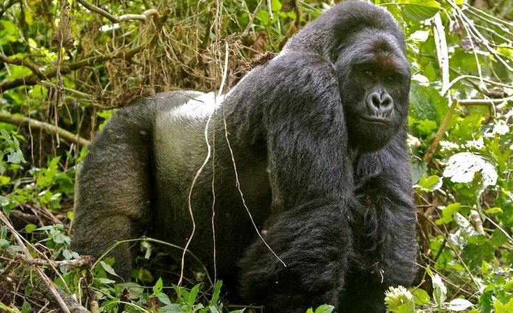 7 days Mount Nyiragongo, Kahuzi Biega national park and Nyungwe forest national park