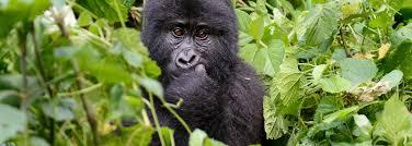 9 days Virunga national park, Mount Nyiragongo and Kahuzi Biega national park