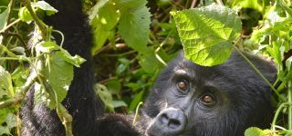 11 Days Virunga Expedition Package