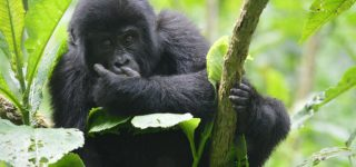 6 Days Virunga Classic Package